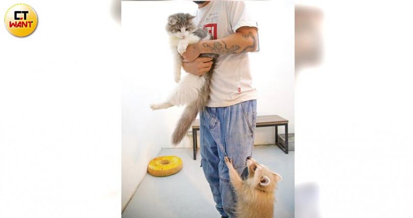 可摸寵物,但不可學老闆抱牠們。且要洗手消毒、戴口罩。(圖/施岳呈攝)