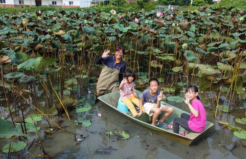 趁著蓮花季的尾聲,可以前來體驗「搭菱角船採蓮子」,在現場採到的蓮子也能帶回家。(圖/宋岱融攝)