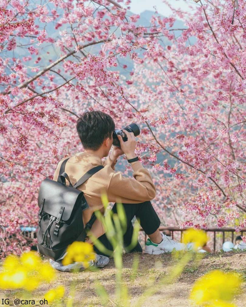 司馬庫斯賞櫻,是春天熱門旅遊行程(圖片來源IG_@cara_oh)