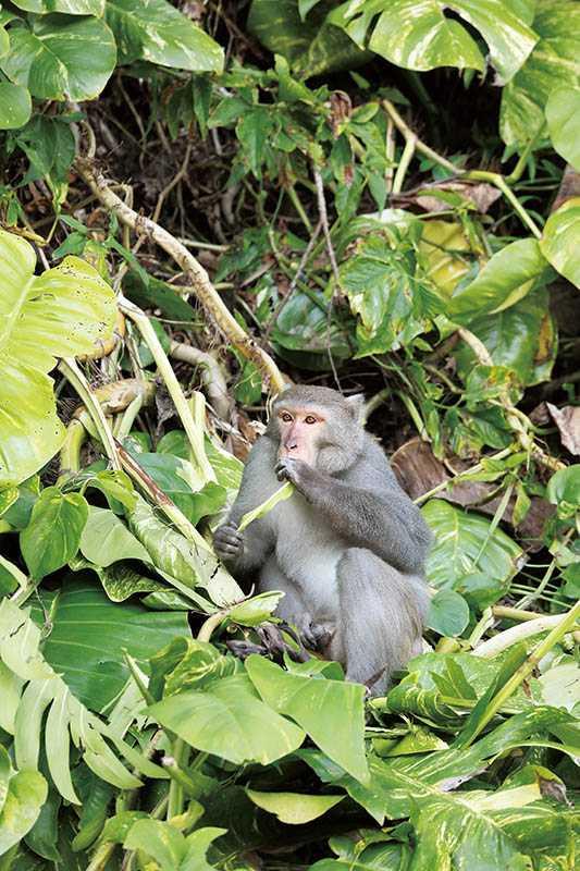 據說「猴洞坑瀑布」曾是猴子的聚集地,因而得名。(圖/于魯光攝)