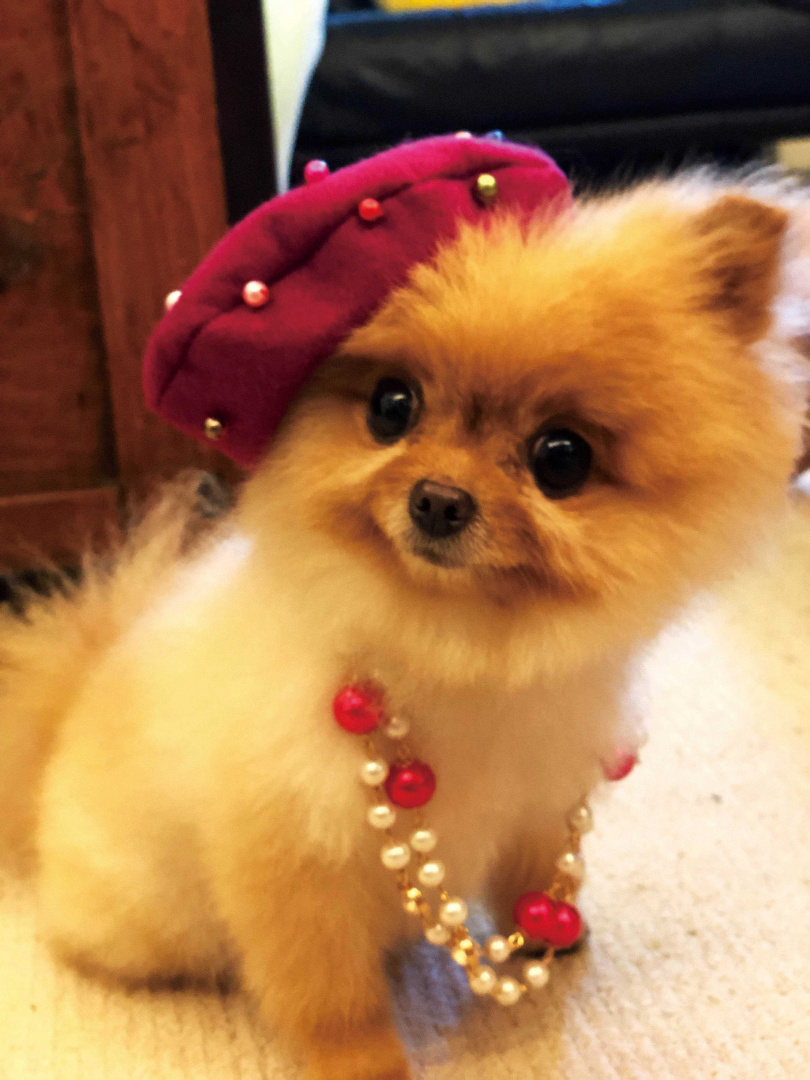 幸醬戴著珍珠項鍊、華麗帽子,扮起「貴婦」的模樣,相當吸睛,令人移不開視線。(圖/伊林娛樂提供)