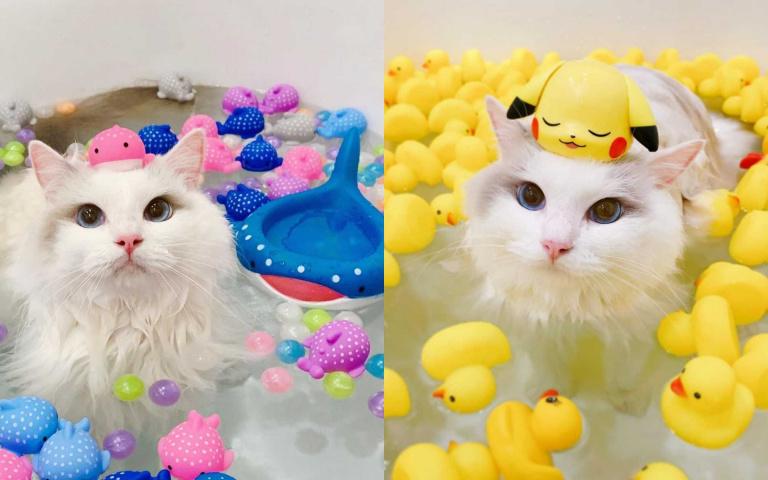 別人家的貓總是不會讓人失望!擁有眾多小物陪伴、愛泡澡的仙氣布偶貓