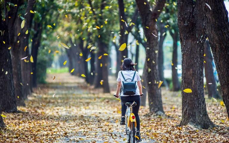 嘉義市季節限定美景! 走訪桃花心木廊道 打卡九重葛花海