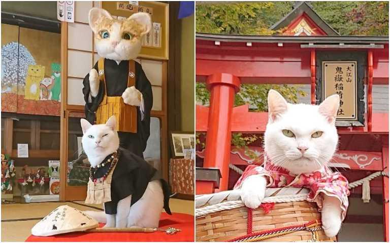 貓咪修行寺廟!京都「貓貓寺」,身為信徒一定要去參拜!