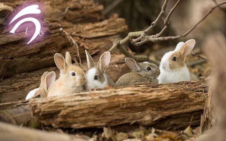 熱愛「兔島」的日本攝影師!每天都被「超萌光波」攻擊無限次