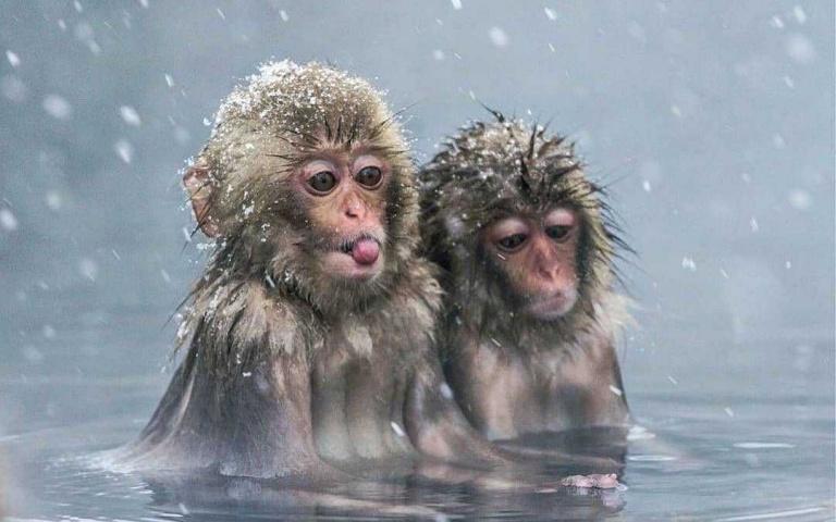 牠們比人類還興奮!盤點10部雪中動物搞笑片段 兔子用頭剷雪就是狂