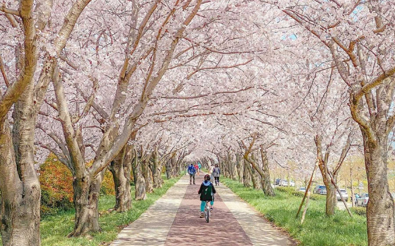 韓國夢幻櫻花季,盤點5大賞櫻景點!現在就開啟任意門直接去吧!