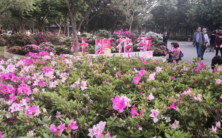 白色情人節何處去?台北杜鵑花季起跑 粉嫩花海開好開滿