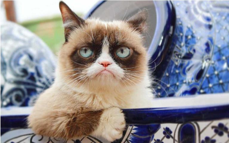 15種貓奴們的日常!這幾張漫畫是不是畫出各位的心聲了……