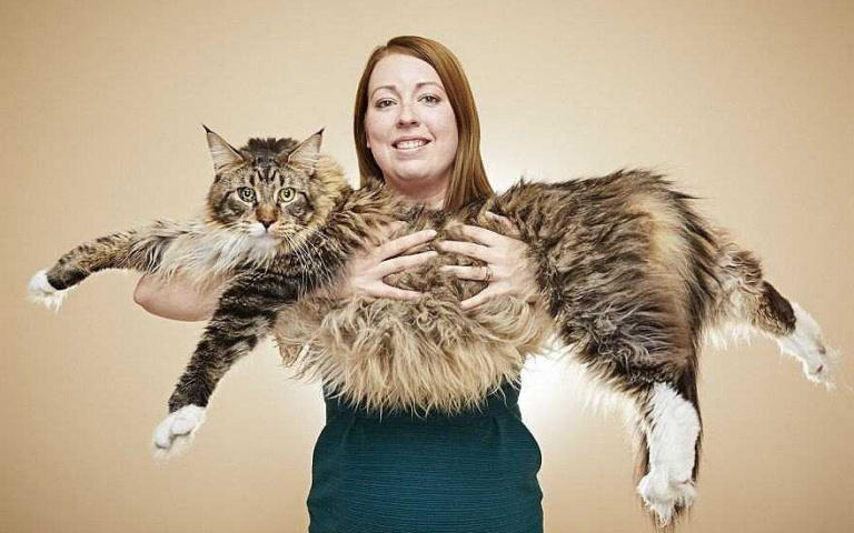 你沒看錯,這真的是貓!世界最長喵星人,比5歲小孩還高!