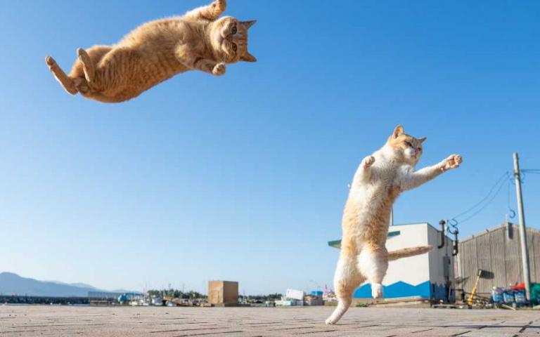看我的無敵貓貓拳!日本攝影師拍出貓咪各種功夫,個個看起來段數超高!
