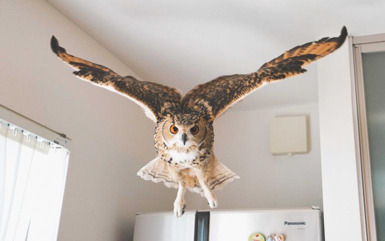 自備喜感的貓頭鷹來瞜!一舉一動都能夠吸引眼球!