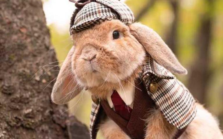 彼得兔真的存在!兔寶寶造型百變紅透IG 讓你一秒被圈粉