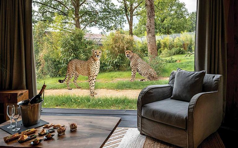「萬獸之王」跟你說早安!「野生動物旅館」開放預訂,還能自駕遊園來場「叢林之旅」!