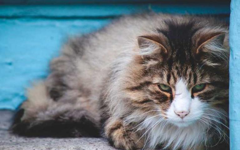 貓咪疼痛的7個徵兆,鏟屎官知道嗎?