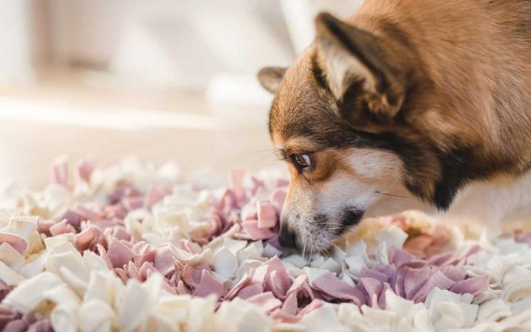 「累得像狗一樣!」就算狗狗不出門,也能玩得超開心的4種招數!