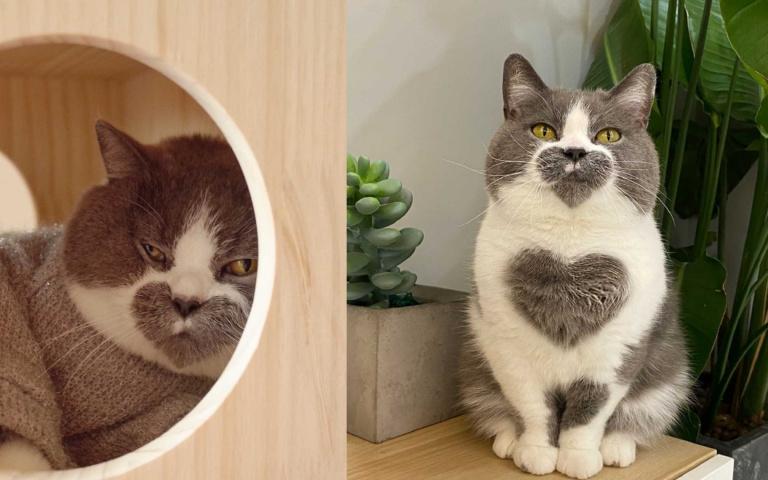 蹲坐好身上有3顆完整的愛心?本貓其實比P貓可愛