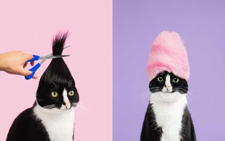 參見公主殿下!百變貓咪Cheeto,每一張都是時尚大片!