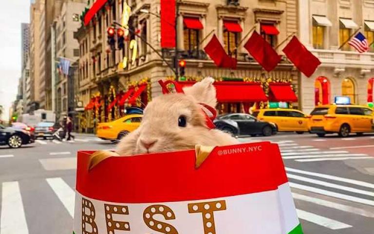 跟著設計師主人到處吃喝玩樂!史上最狂兔寶來自台灣 還曾經開跑車勇闖紐約時裝週