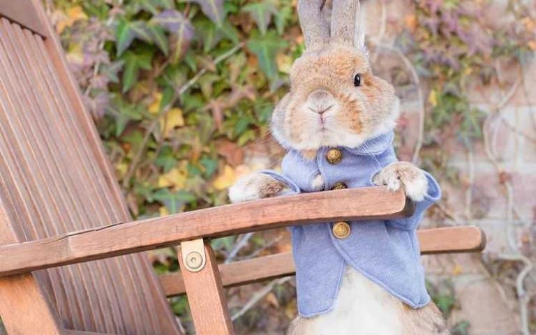 兔奴要尖叫啦!彼得兔們攜手走出大螢幕了 可愛到人類直接舉白旗投降