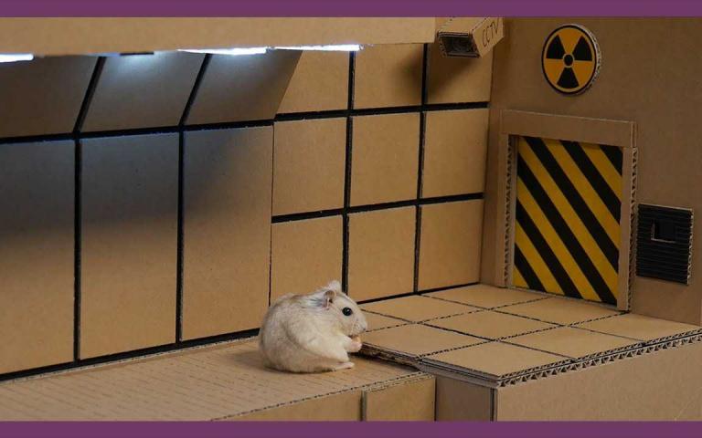 韓國「鼠界富豪」!擁有鼠臉辨識豪宅與眾多財產的幸福小倉鼠