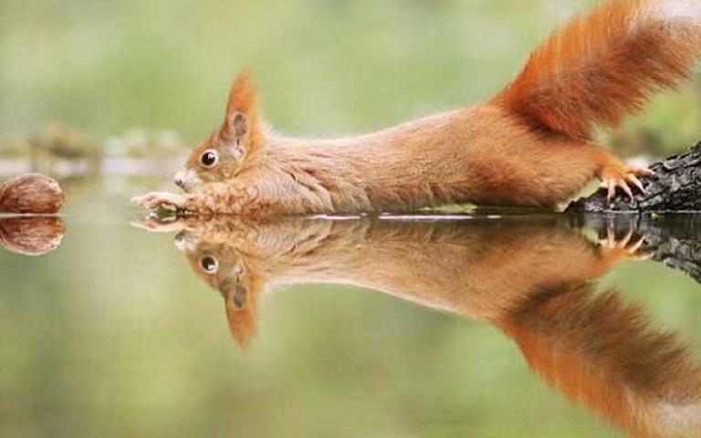 賣萌無罪!療癒系野生動物大集合 每一張都想當桌布怎麼辦?