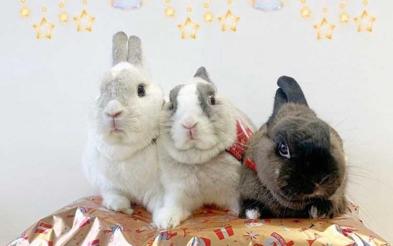 不只拍廣告還接代言!新北三隻兔寶人氣超旺 面對鏡頭不怯生成「最萌網紅」!