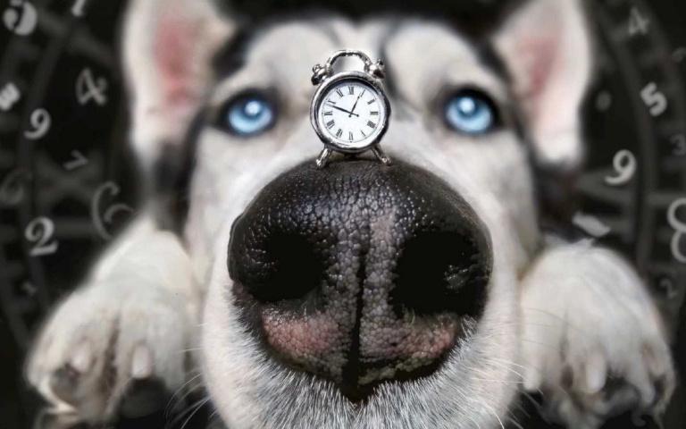 汪星人魅力電眼!擁有藍眼睛的4種狗狗品種,看得讓人一秒融化!