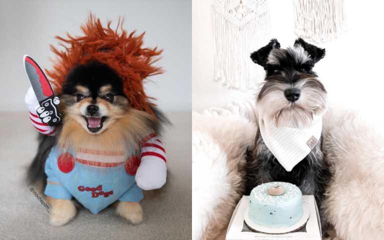 12種長壽的狗狗品種,來看看你家的狗有沒有上榜!