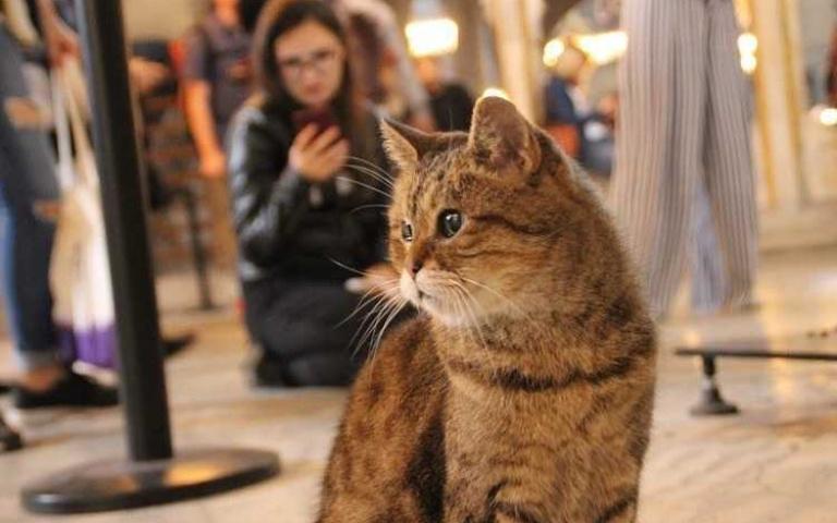 世界遺產認證的永久居民「鎮館貓皇」退休了!