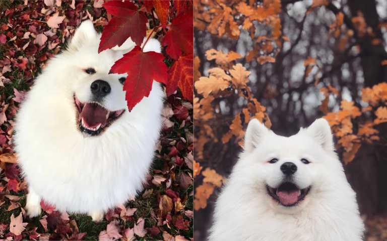 吃可愛長大是這樣的~狗狗吃播ASMR好療癒,看著都餓了!