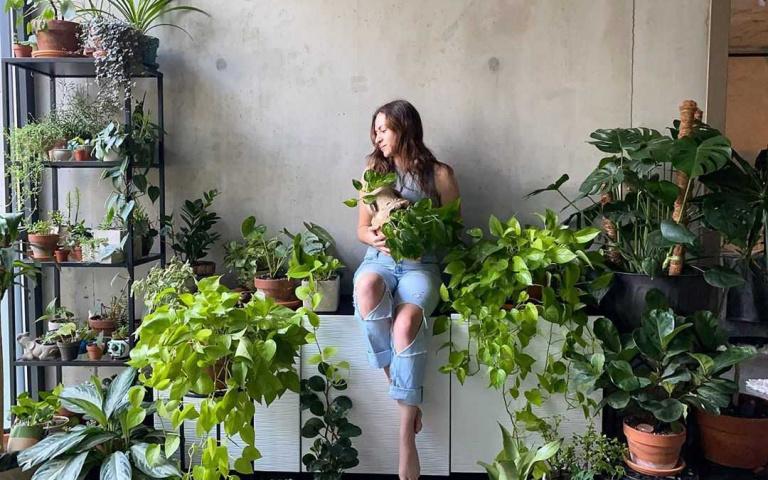 植物殺手/新手都能養活的四款室內植栽!