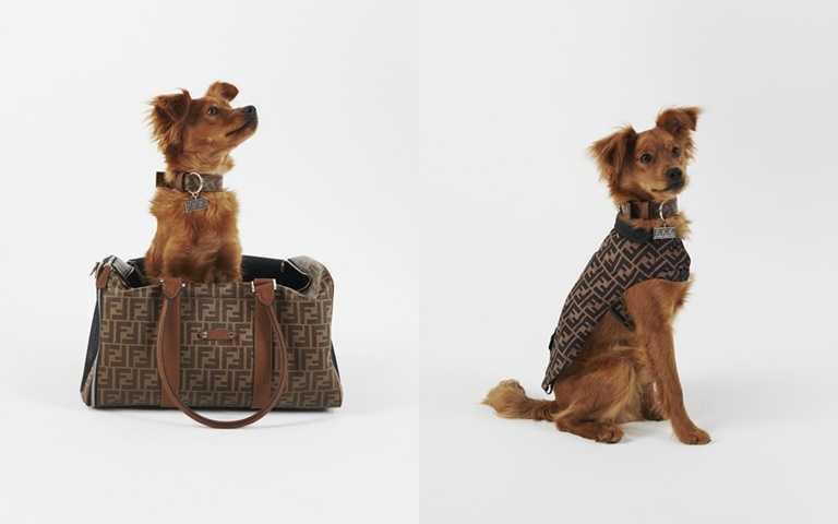 FENDI推出專屬寵物旅行配飾系列 與最愛的毛小孩開啟一場時尚旅程