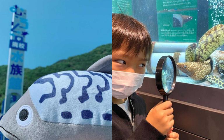海龜、小鯊魚上學啦!由廢校變身的日本「室戶廢校水族館」