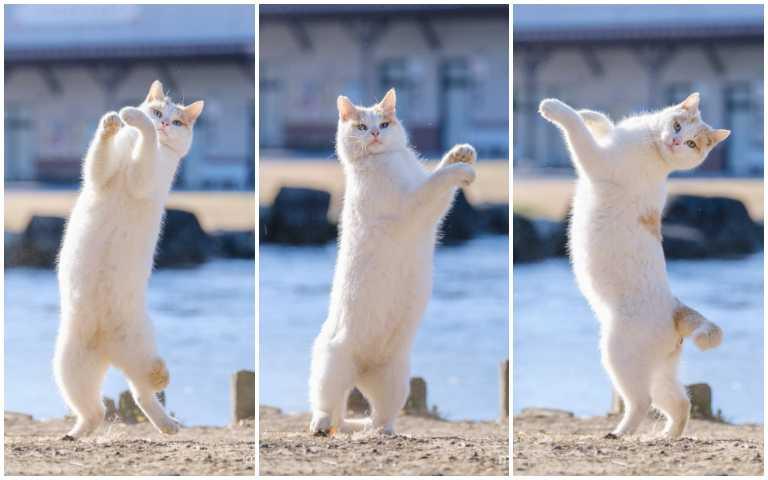貓奴們集合囉!日本2月22日歡慶「貓之日」,快來一起曬自家貓咪萌照!