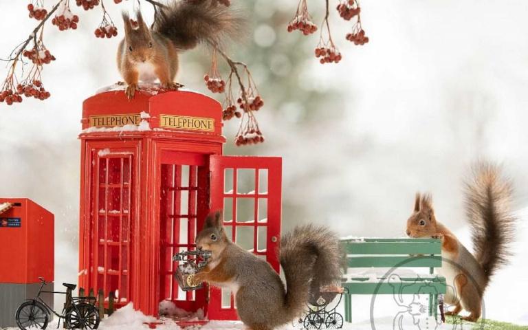野生松鼠麻豆!攝影師用過人耐心 + 堅果吸引松鼠,拍出奇蹟美照!