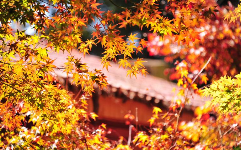 一起去看「楓」景吧!秋天限定全台賞楓景點推薦