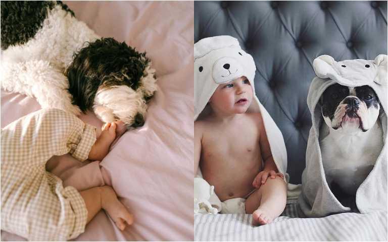 狗與孩子可以兼得!能和孩子和平相處的8種狗狗,一起長大成為最佳保母!