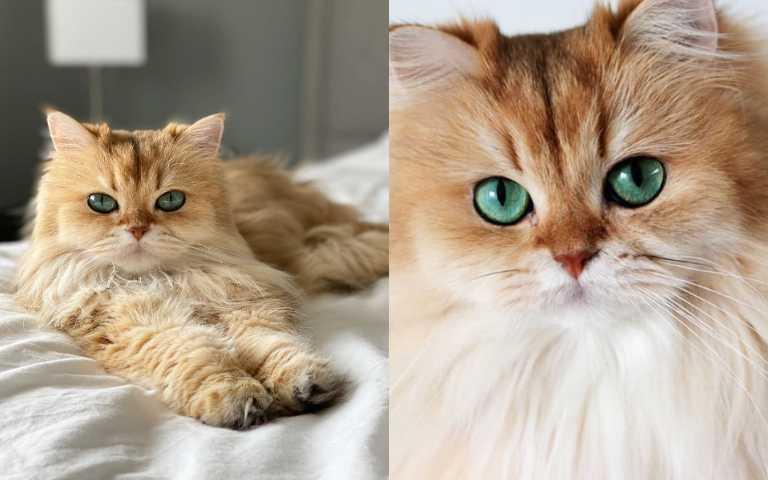 超級貓模生死鬥!世界最上鏡的喵星人,驚世顏值連網美都被比下去