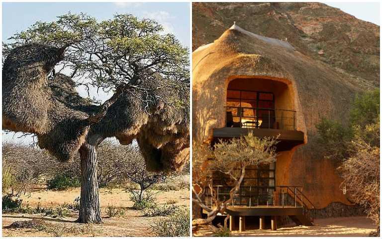 Porky Hefer仿照「群織雀」巢穴,在沙漠中打造出超級鳥巢住宅!