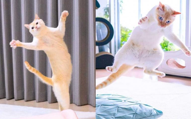 忍者喵是你?來自日本的爆笑小橘貓,崩壞寫真照大公開!