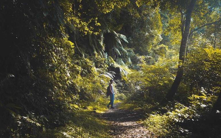 解放壓力!來一場半天就可以來回的森林微旅行