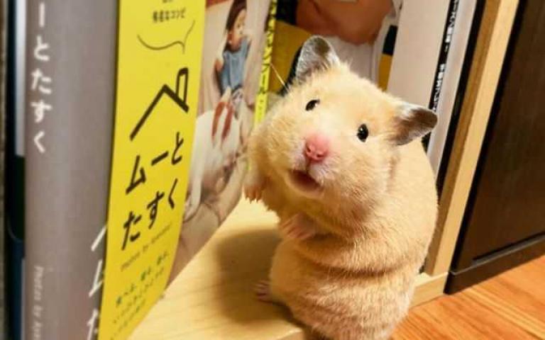 有練過功夫的鼠鼠就是牠!超級軟骨功發威有夠狂「門底縫隙難不倒我!」
