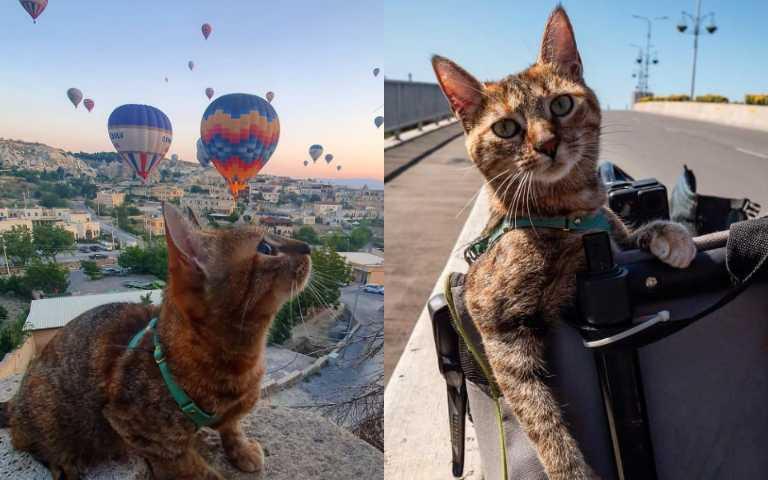 「人不如貓」是真的!搭便車環遊世界的貓皇帝,說不羨慕牠是騙人的!