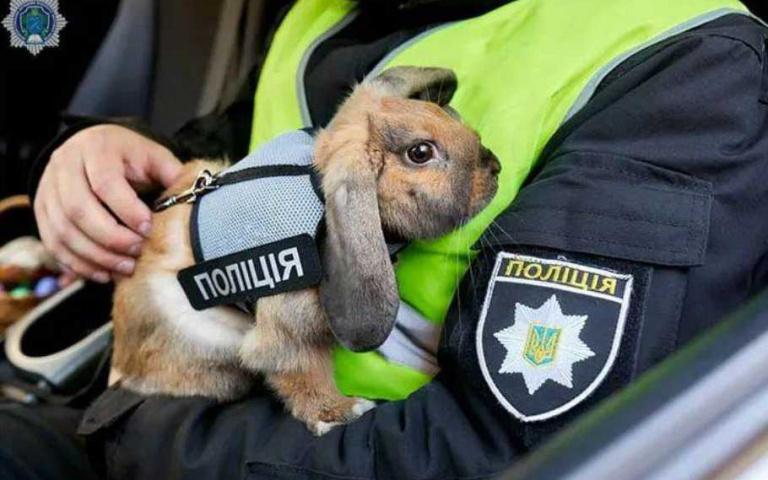 《動物方城市》是真的!垂耳兔身穿「警用背心」成「專業警兔」,犯人立刻繳械投降啦!