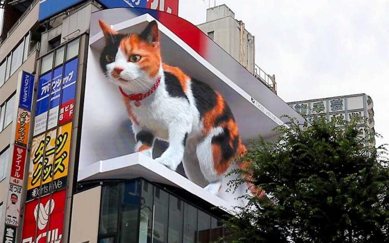 喵皇降臨?「巨型三色花貓」現身新宿車站,還會與「路人撒嬌」超逼真!