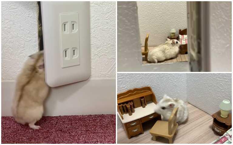 哈姆太郎房間大公開!小小倉鼠YouTuber拍片秀出超舒適生活空間!