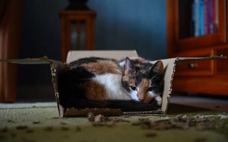 你知道嗎~箱子放久了就會長出貓喔