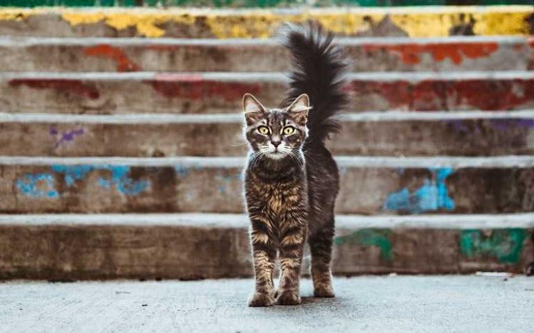 除了哈氣與炸毛,貓貓被惹得不開心的5種表現