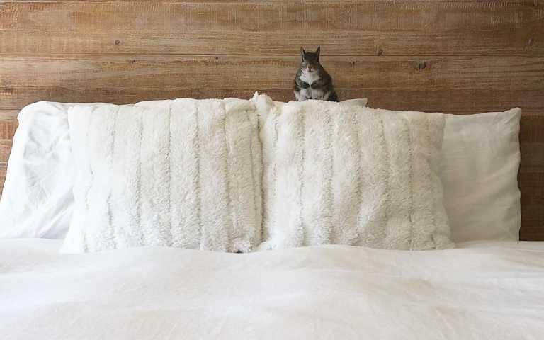 愛笑的動物運氣不會太差!失去家園的松鼠,搖身一變成超級網紅!